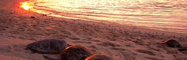 Kona, Hawaii - Photo: Steve Jurvetson via Flickr, used under Creative Commons License (By 2.0)